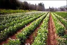 دانلود مقاله نقش و اهمیت کشاورزی پایدار