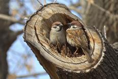 دانلود طرح جابر کلاس اول دبستان لانه ساختن یک پرنده